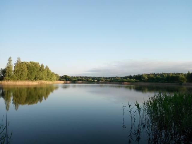 озеро, деревья, камыш