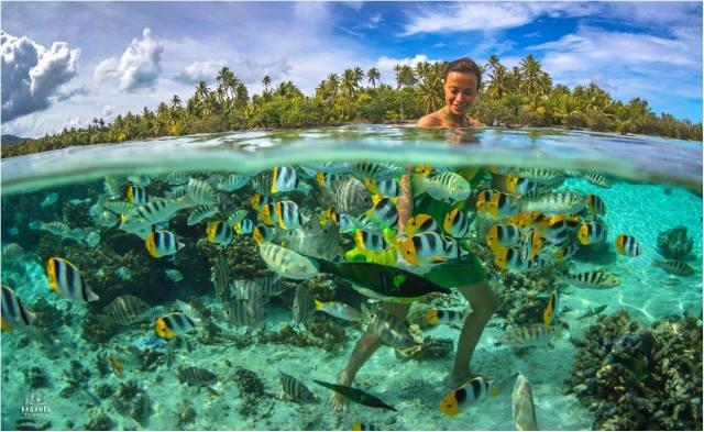 tropics, girl, the ocean, fish