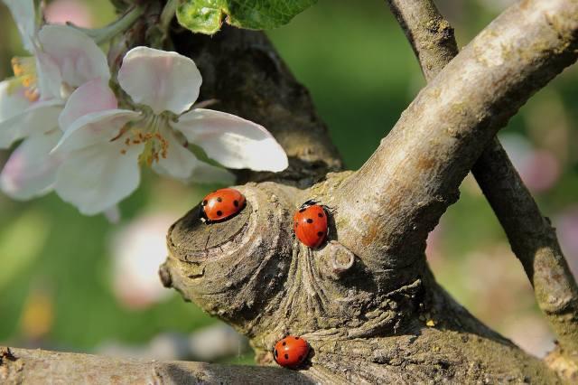 весна, дерево, гілки, цвітіння, квіти, сонечка