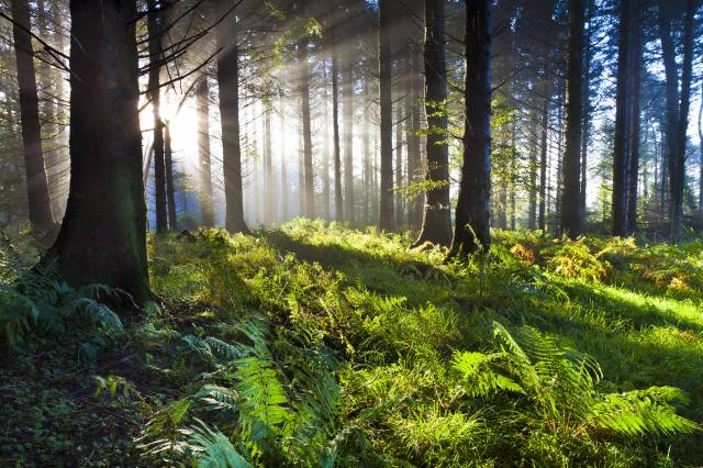 nature, forest, rays, the sun