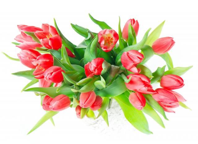 tulipány, květiny, světlé pozadí