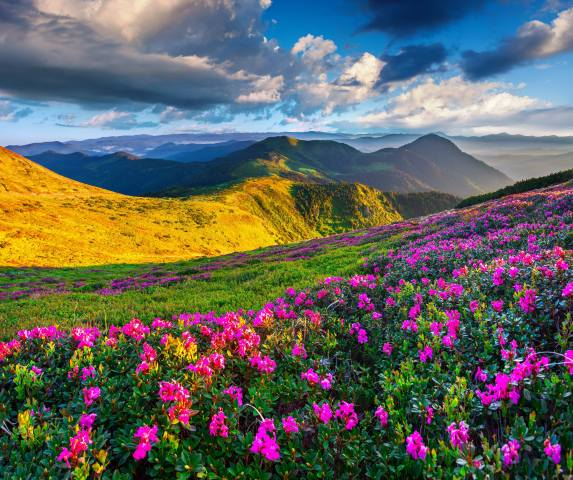 mountains, rhododendron, landscape, the sky, grass, clouds