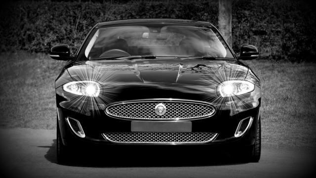 Jaguar, black