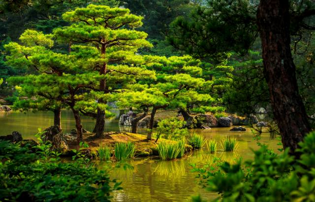 Japan, greens, stones, trees, The BUSHES, the pond, the reeds, Kyoto, garden
