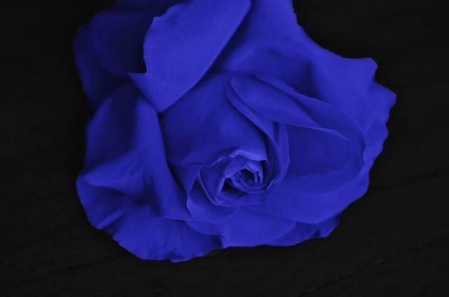 Purple, rose, black, background