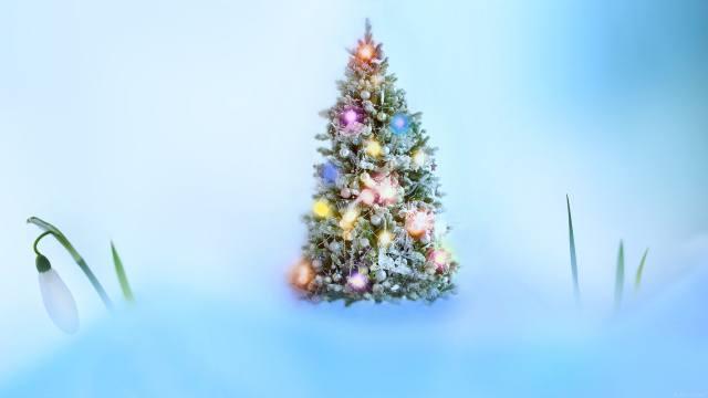 winter, thaw, tree