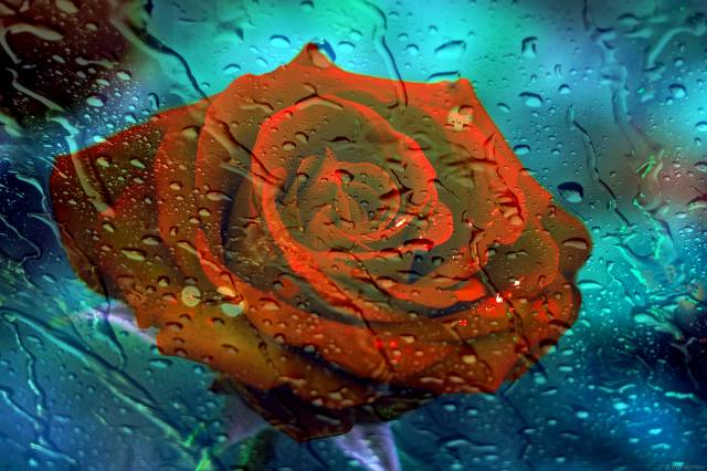 rose, light, glass, drops, night
