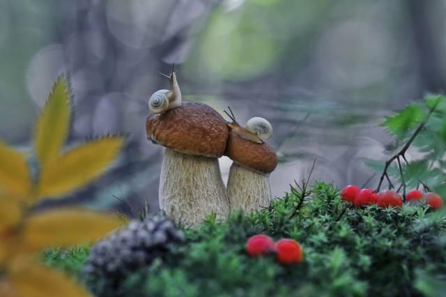 mushroom, macro, Snail