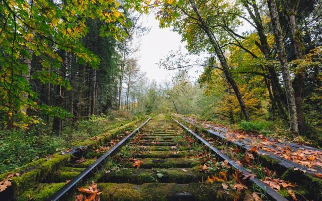 railway, forest