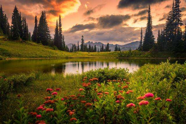 nature, landscape, the lake, the shore, grass, mountains, flowers, trees, ate