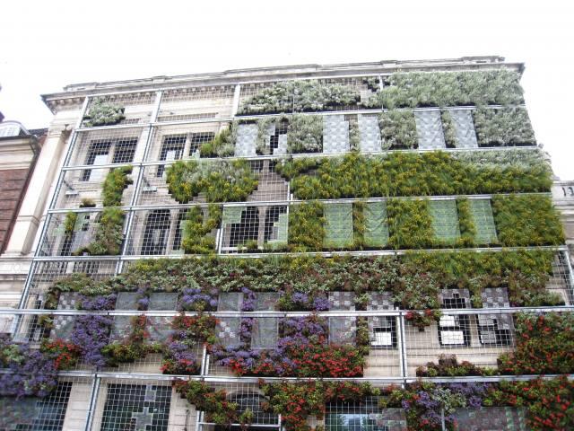 будинок, фасад, квіти, рослини, Данія