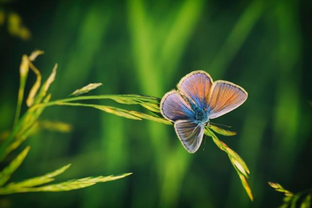 summer, macro, nature, butterfly, insect, a blade of grass