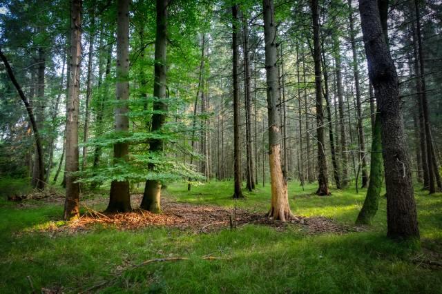 trees, grass, leaves, fallen, beautiful
