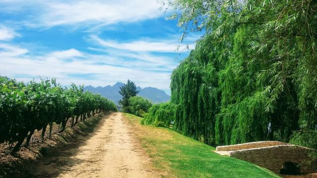 cesta, vinice, stromy, zeleň