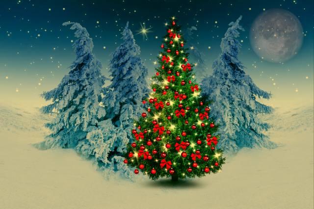 tree, holiday, night