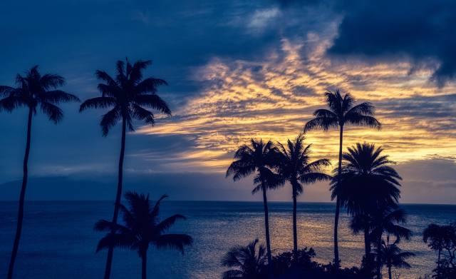 palmové, léto, oceán, horizont