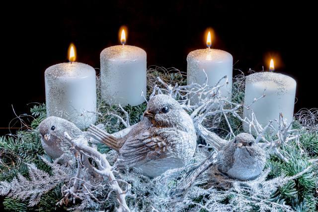 svíčky, oheň, ptáci, Nový rok, hnízdo, Vánoce, pták, Plameny