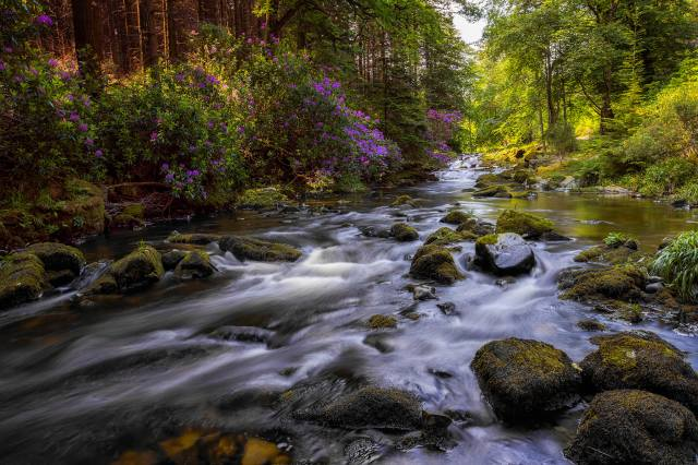 nature, summer, Northern Ireland, Barrie Lathwell, forest, river, stones, moss, rhododendron