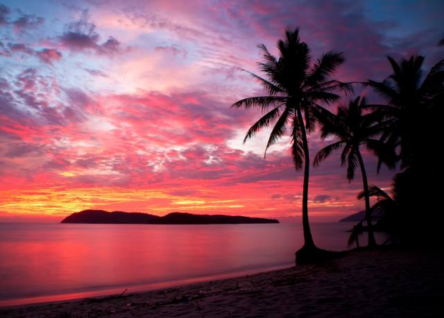 palm trees, pink, sunset