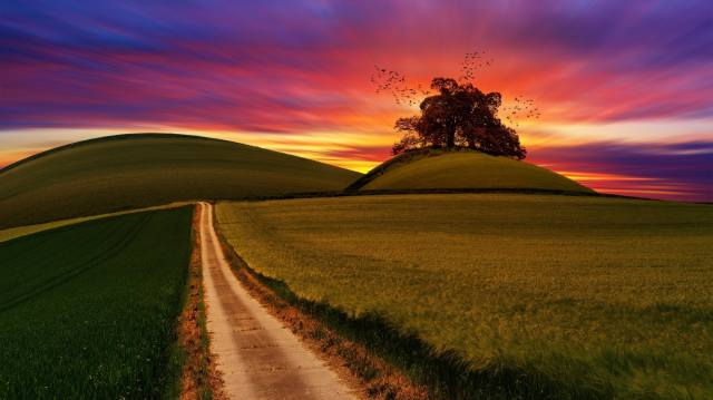 road, trees, landscape, sunset, birds, nature, hills, field