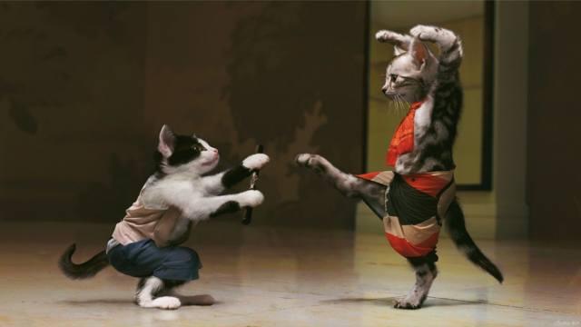 КОТИ, бійка, котэ-каратэ, забавные коты