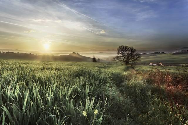природа, пейзаж, холмы, поле, трава, дерево, дома, утро, туман