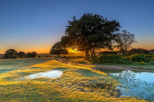 Англия, парк, вода, New Forest Water Park, деревья, трава, природа