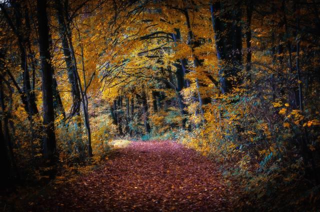 autumn, trees, leaves, nature