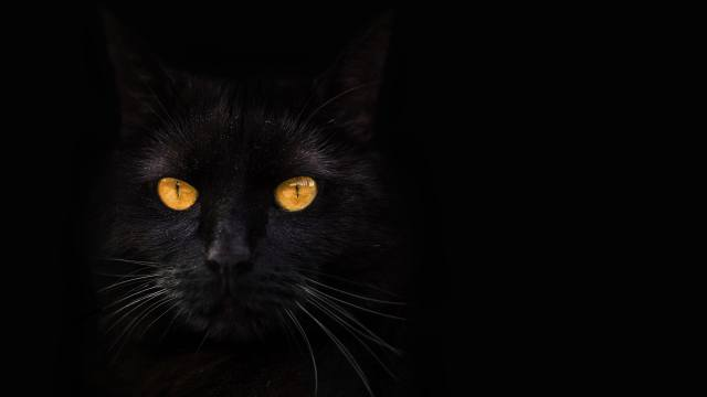 black cat, yellow eyes, darkness