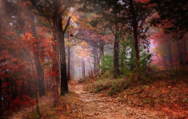 příroda, krajina, les, stromy, stezka, podzim