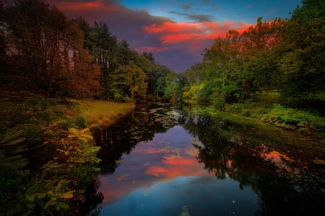grass, trees, landscape, sunset, nature, the pond, Park, USA, The BUSHES