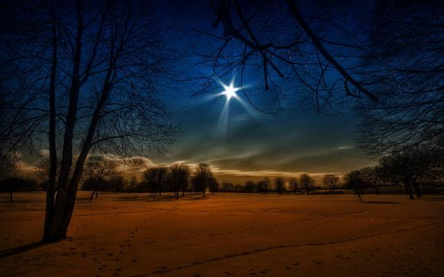 the moon, snow, forest, trees, winter, traces, night, the sky