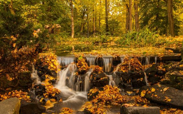 waterfall, autumn, yellow leaves, yellow trees, forest