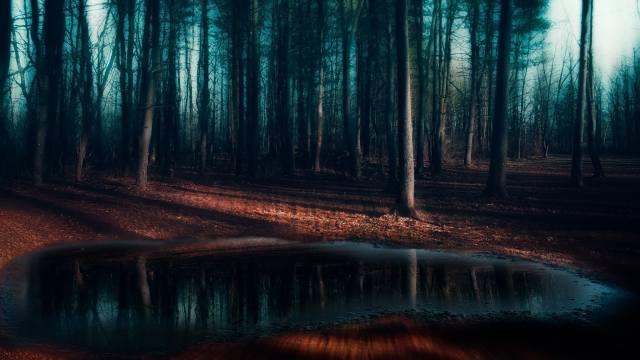 лес.туман.лужа, frost