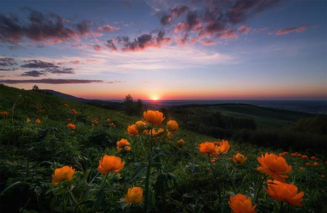 Paul, Kalinenko, nature, landscape, Altai, hills, meadows, flowers, sunset