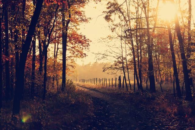 morning, trees, fog, the sun's rays, the fence