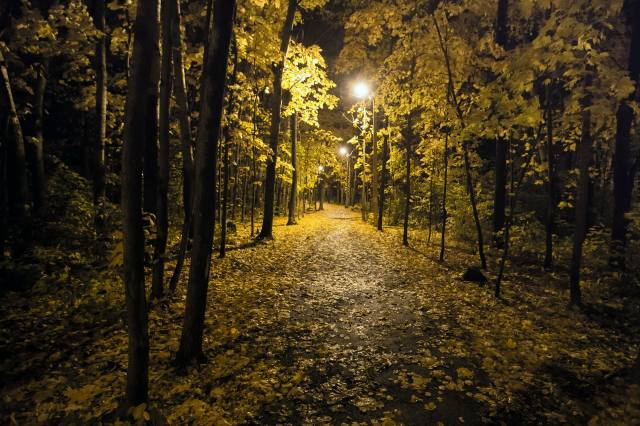 night, Park, trees, lights, autumn