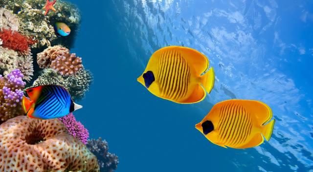 příroda, voda, světlo, Zvíře, zvířata, v tropech, tropické, moře, námořní
