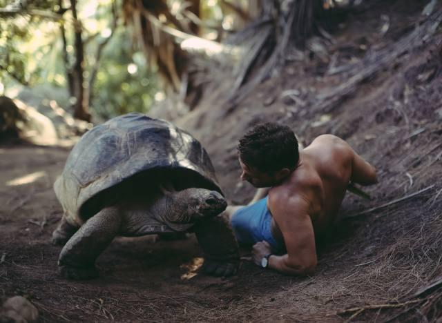 David Olkarny, man, turtle