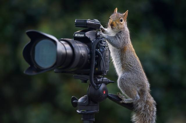 Squirrel, photographer