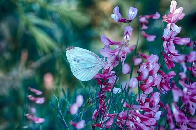 Mustafa Ozturk, příroda, tráva, květiny, motýl, makro