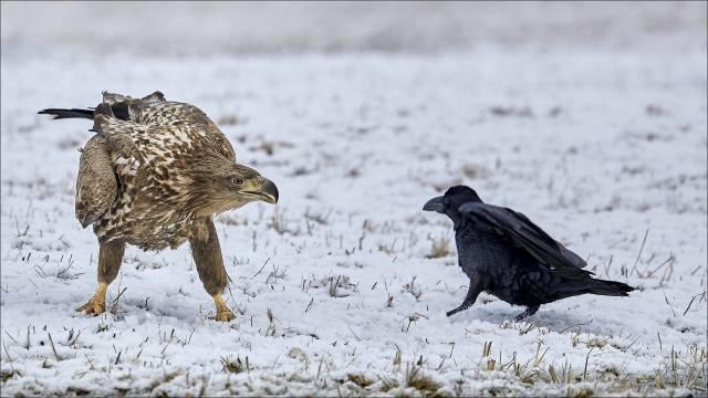 птахи світу, зима