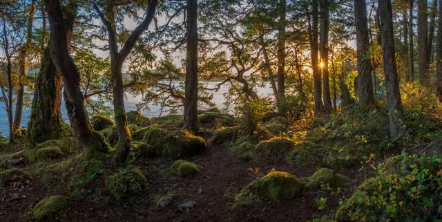 Kanada, stromy, mech, příroda