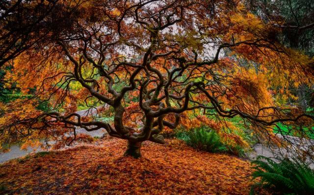 strom, větvičky, příroda, podzim, listy