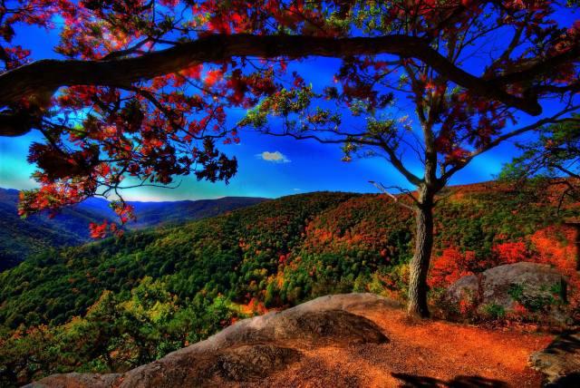 příroda, krajina, kopce, Lesy, podzim, kameny, strom, větvička, nebe