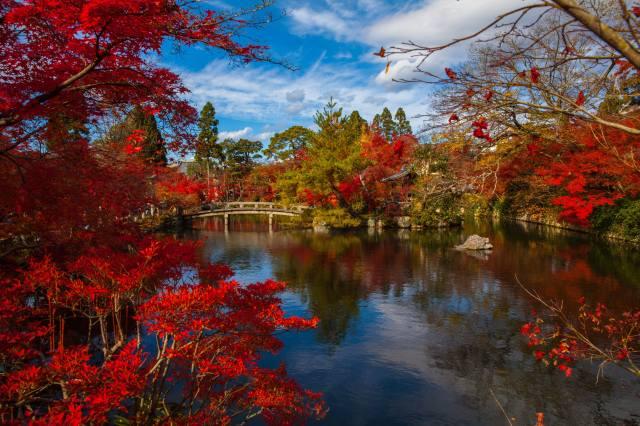 Japonsko, park, příroda, podzim, stromy, rybník, most