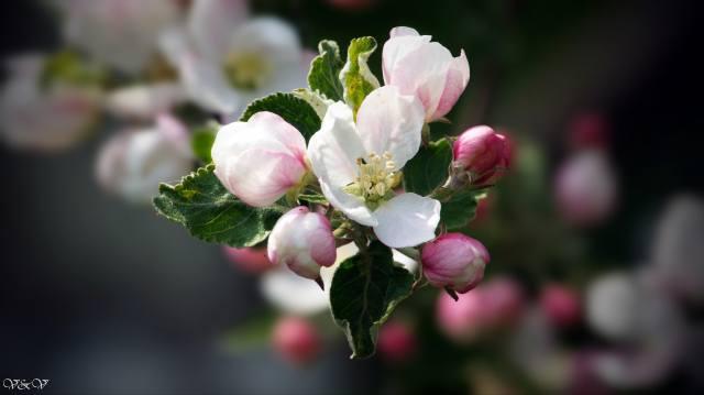 květina, krásný, для души