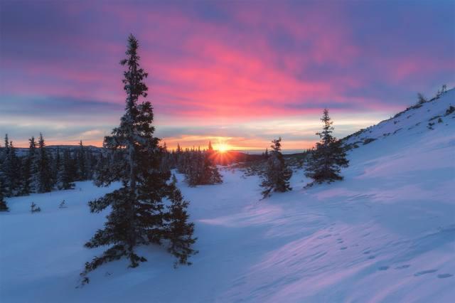 зима, ліс, сніг, Михаил Туркеев