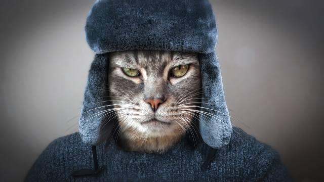 очі, кіт, погляд, морда, Рендеринг, сірий, фон, одяг, шапка