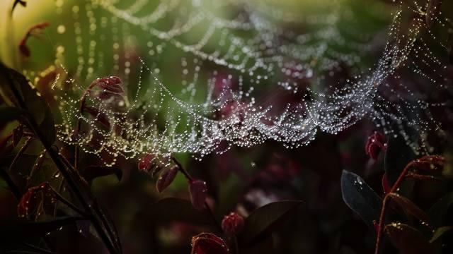 web, drops, leaves, macro